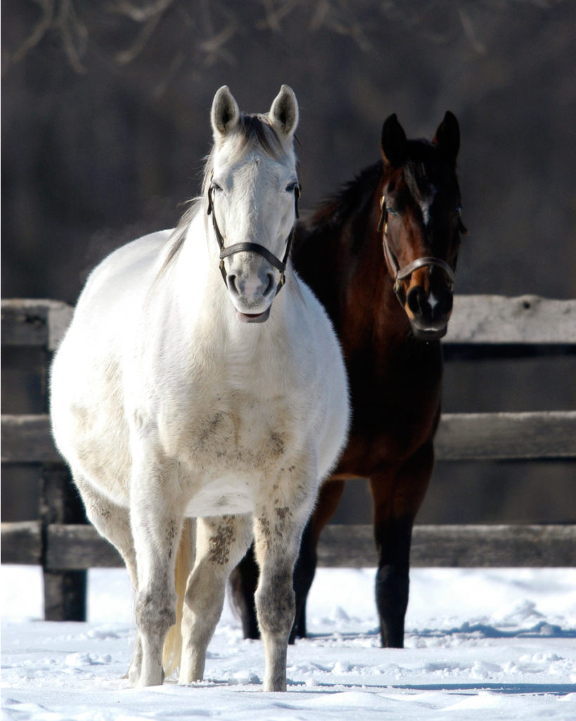 white and brown horses in snow
